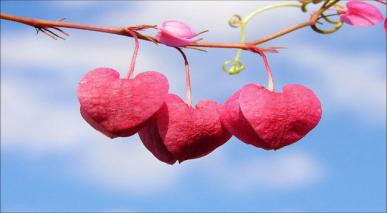 پرانا عشق کیسے بھولاؤں