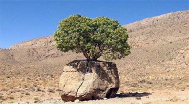 اللہ کی قدرت سے اسباب کا اسباب سے مل جانا